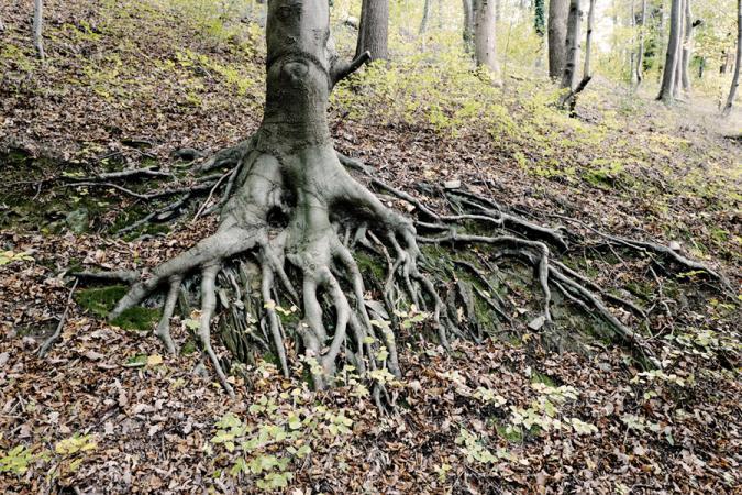 Grégoire De Poorter - grevision - Belgium - Spa - tree - roots
